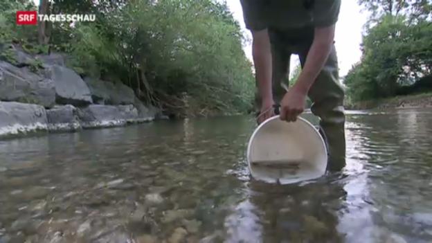 Video «Den Fischen geht die Luft aus» abspielen