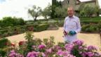 Video «Kurt Aeschbacher: Im Gartenparadies in Südfrankreich» abspielen