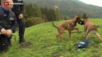 Video «Spürhunde sollen illegale Importe identifizieren» abspielen