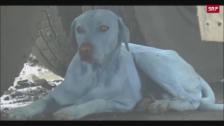 Link öffnet eine Lightbox. Video Blaue Hunde streifen durch Mumbai abspielen