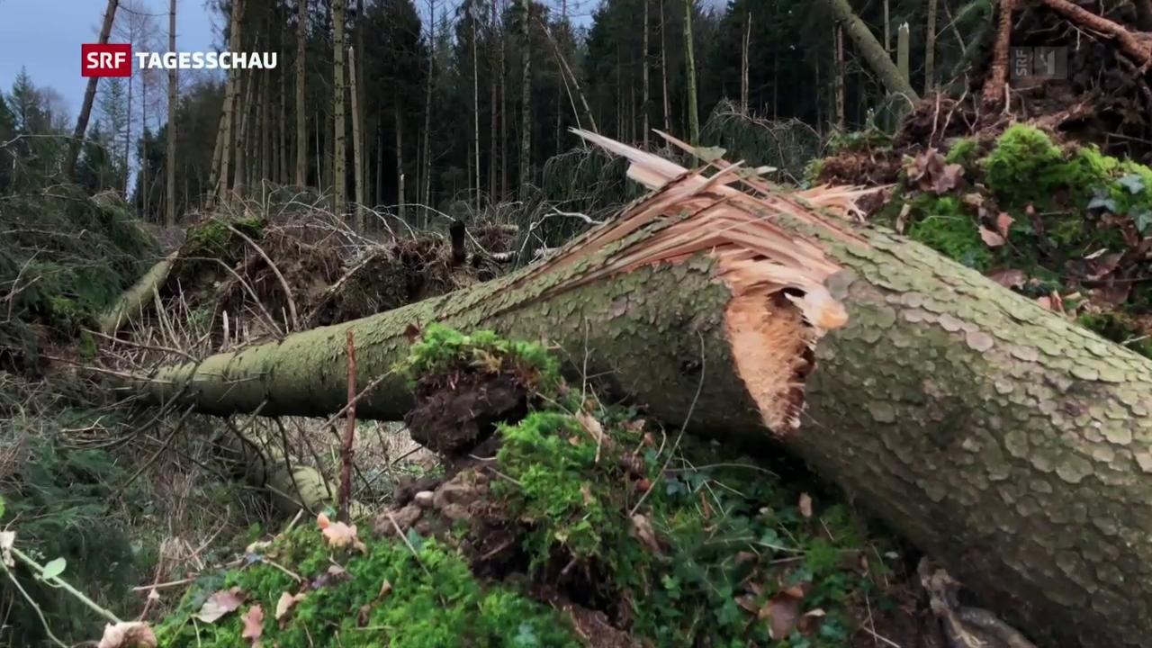 Waldschäden nach Sturm «Burglind»