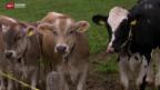Video «Glocken-Streit im Zürcher Oberland» abspielen