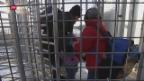 Video «Eingesperrt und eingezäunt» abspielen