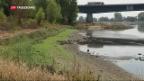 Video «Prekäre Wassertemperaturen in Deutschland» abspielen