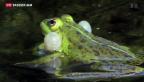 Video «Pro Natura will Amphibien schützen» abspielen