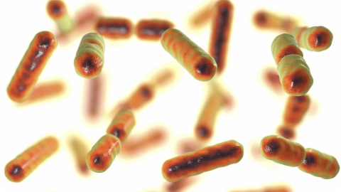 Unterschätztes Mikrobiom – Gesunder Darm, gesunder Mensch?