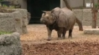 Video «Der Zootierarzt: Elefant, Regenbogenboa und Nashorn» abspielen