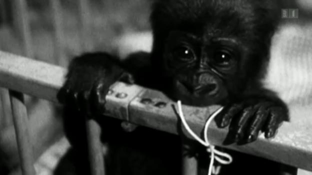Video «Goma's Geschichte» abspielen