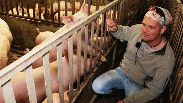 Video «Vom Dreckschwein zur Wiesensau» abspielen