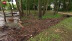 Video «Hochwassergefahr nach Dauerregen» abspielen
