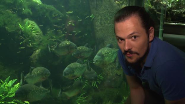 Video «Die Piranhas (10)» abspielen