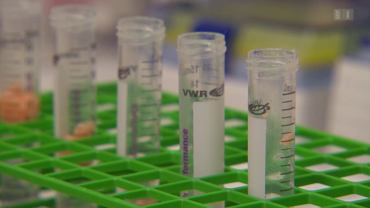 Pestizide im Zuchtlachs: Giftige Chemikalien auf dem Teller