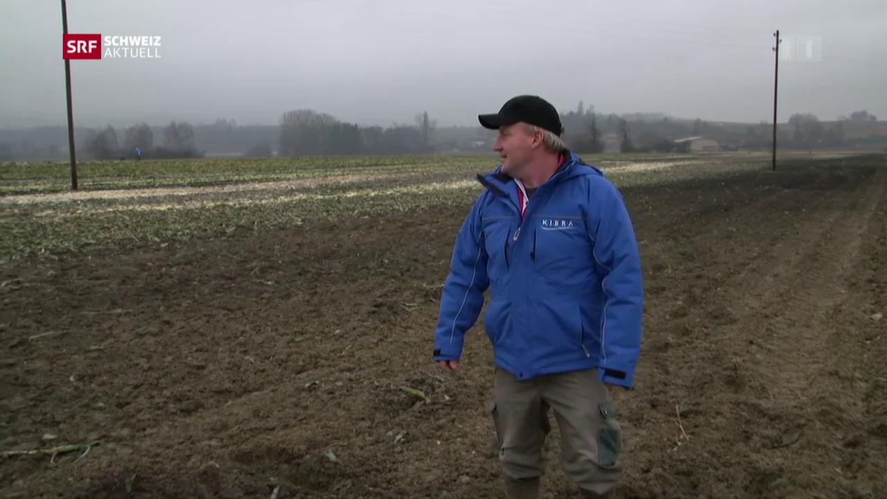 Gemüsebauern scheren sich um Baubewilligung