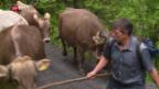 Video «Schweiz aktuell am Gotthard» abspielen