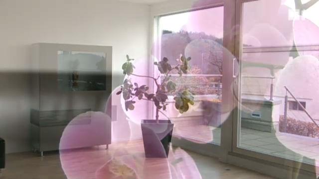 Zimmerpflanzen verbessern die Raumluft