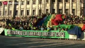 Video «Uruguay legalisiert Marihuana» abspielen