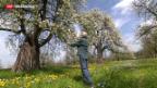 Video «Most-Birnen immer weniger gefragt» abspielen
