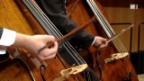 Video «Musikinstrumente aus bedrohtem Ebenholz-Bestand» abspielen