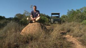 Video «Pätagei in Südafrika – Highlights» abspielen