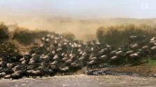 Video «Savanne - Im Reich der Vulkane» abspielen