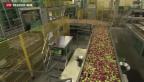 Video «Russlands Einfuhrverbot für Lebensmittel zeigt Wirkung» abspielen