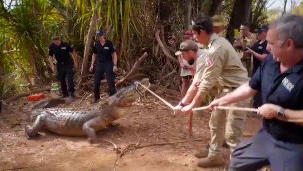 Video «Vier-Meter-Tier geht in die Falle» abspielen