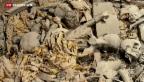 Video «Basler Archäologen entdecken 50 ägyptische Mumien» abspielen