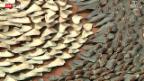 Video «Lukratives Geschäft mit Haifisch-Flossen» abspielen