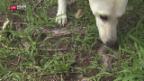 Video «Such die Fledermaus!» abspielen