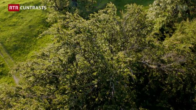 Laschar ir video «Gigants – tschintg bostgs monumentals en il Grischun»