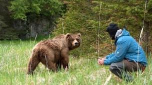 Link öffnet eine Lightbox. Video Der Bärenmann – Reno Sommerhalders Leben unter Bären abspielen.