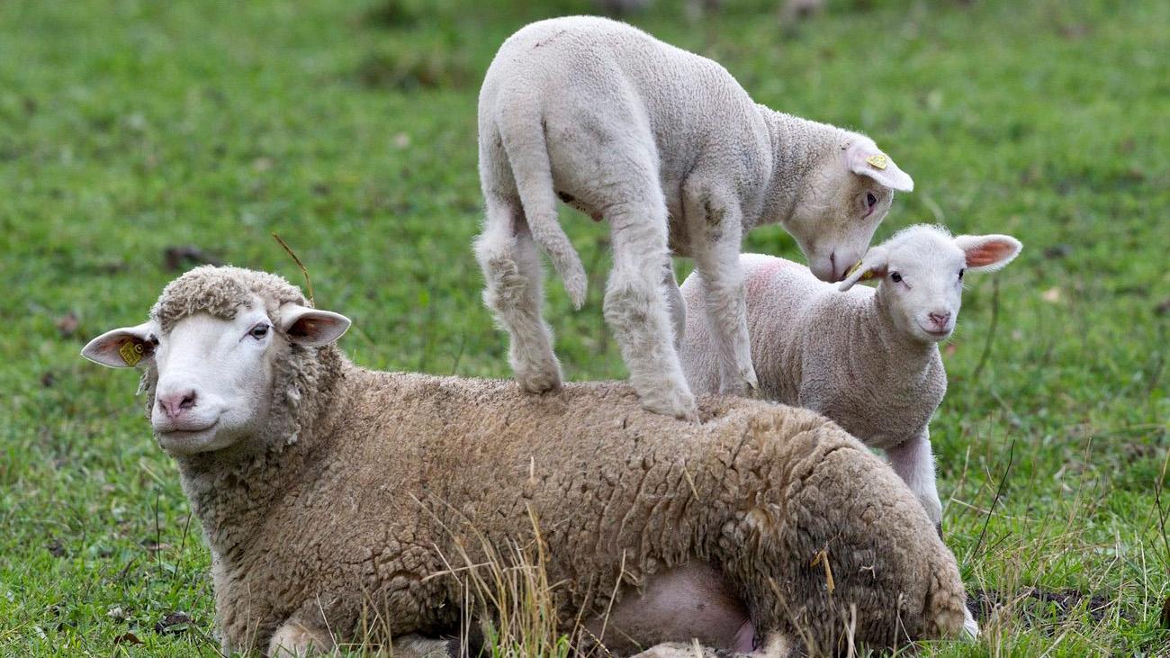 Was verspeist man in Irland an Ostern?