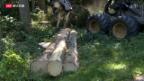 Video «Holzindustrie ächzt» abspielen