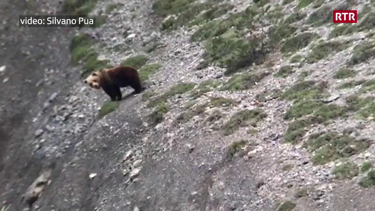 Urs en Val d'Uina