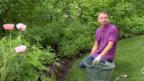 Video ««G&G blüht auf»: Innenarchitekt Andrin Schweizer zeigt seine Oase» abspielen