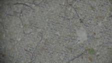 Link öffnet eine Lightbox. Video Plastikfasern im Südpolarmeer gefunden abspielen