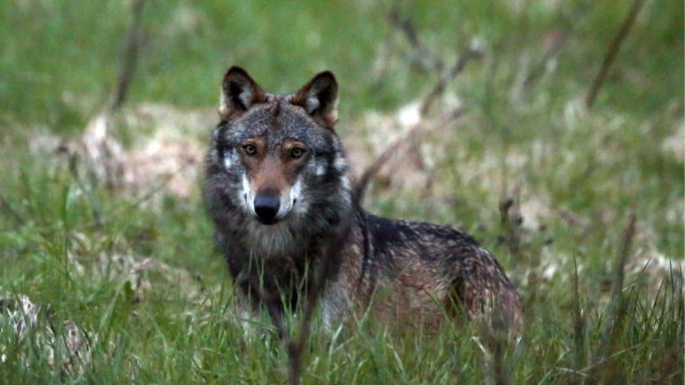 Die «Wolfsfeuerwehr» aus dem Kanton Uri