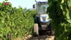 Video «Frankreich fürchtet grosse Ernteverluste bei den Reben» abspielen