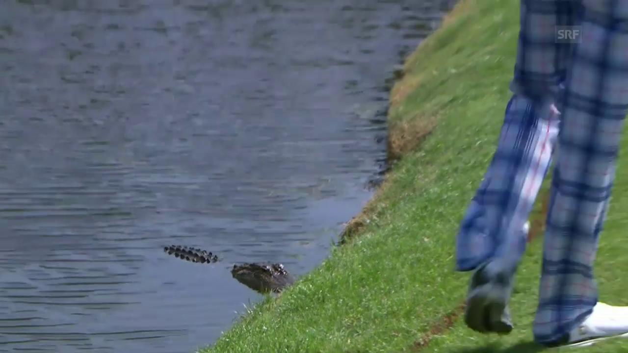 Poulter macht Bekanntschaft mit einem Alligator