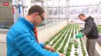 Video «Bauern der Grossstadt» abspielen