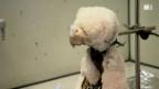 Video «Folter für den Teddy im Sicherheitstest» abspielen