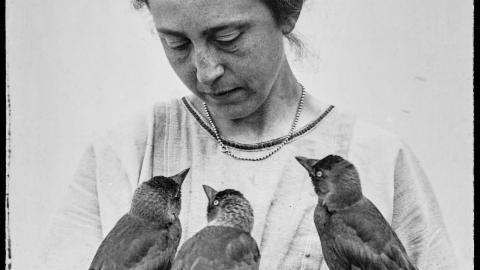 Die Heinroths und ihre 1000 Vögel