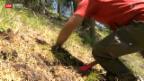 Video «Waldbrandgefahr im Unterengadin» abspielen