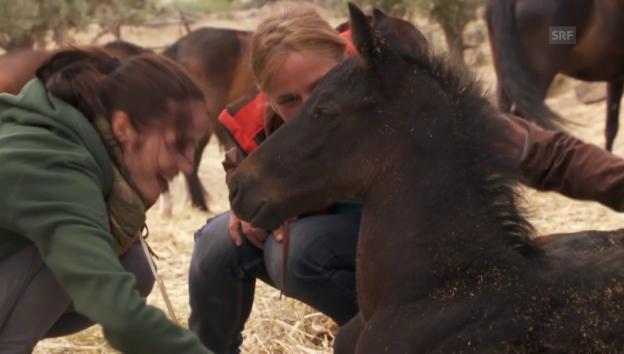 Video «Fohlen in Andalusien» abspielen