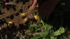 Video «Kein Wasser für Landwirte» abspielen