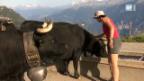 Video ««SRF bi de Lüt – Landfrauenküche» bei den Eringer Kühen» abspielen