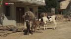 Video «FOKUS: Die Rückkehr in die zerstörte Heimat» abspielen