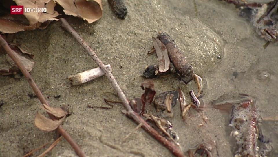 Plastik im See: Wie belastet unser Wasser ist