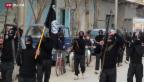 Video «Syrien und seine Kämpfer» abspielen