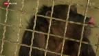 Video «Vom Affen gemalt» abspielen